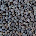 çilban tohumu antalya