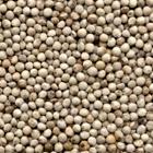 beyaz perilla tohumu antalya